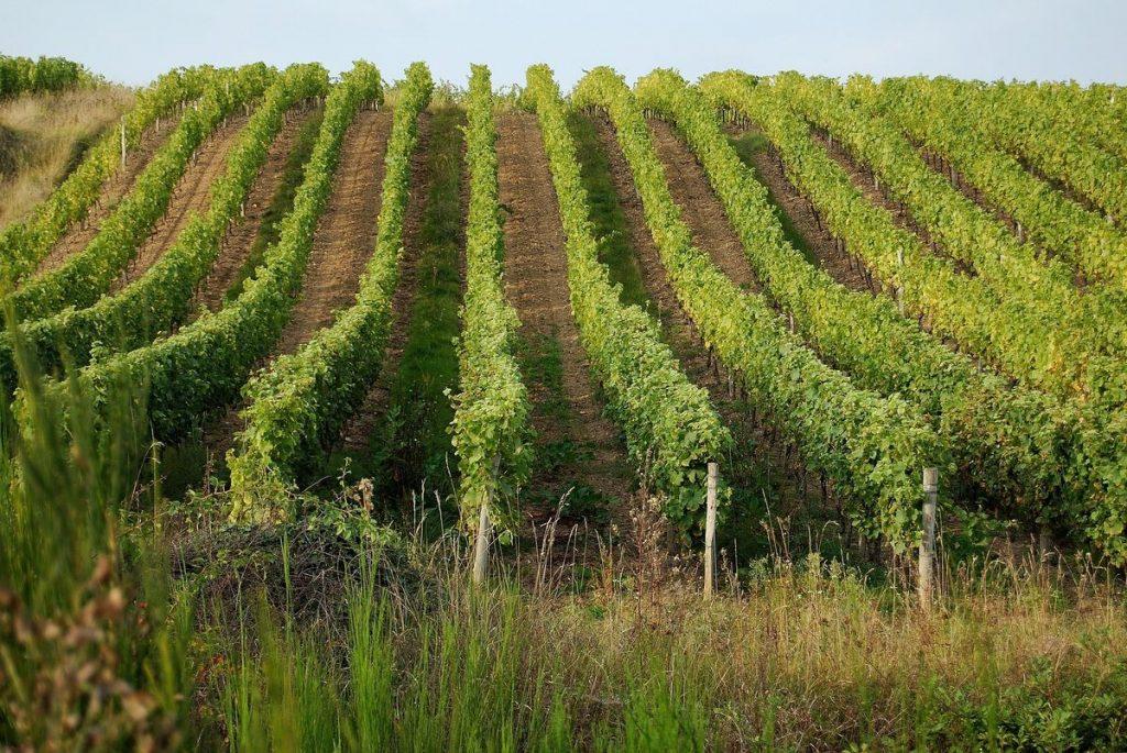 visiter-tours-vignobles-loire